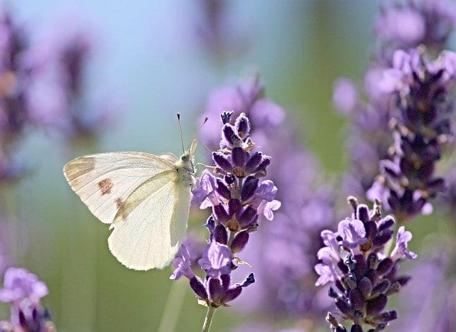Planting native plants is an important part of a thriving pollinator garden